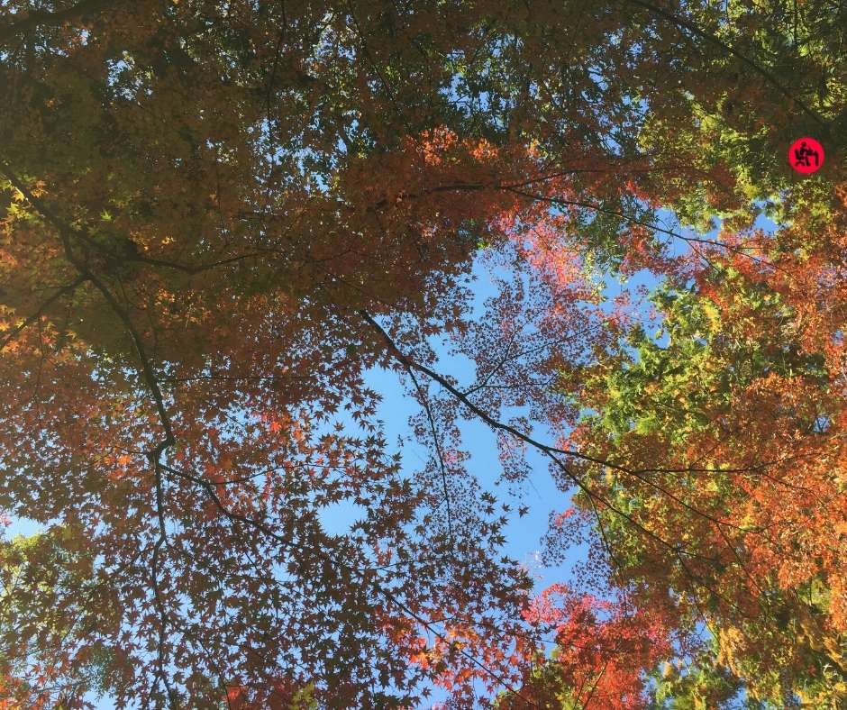 Japanese autumn sky
